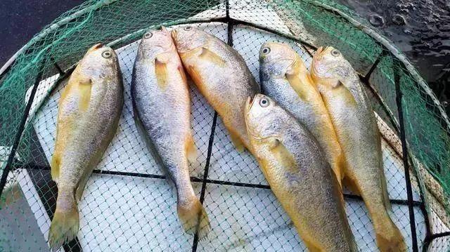 家常炖鱼的方法,如何做鱼好吃?